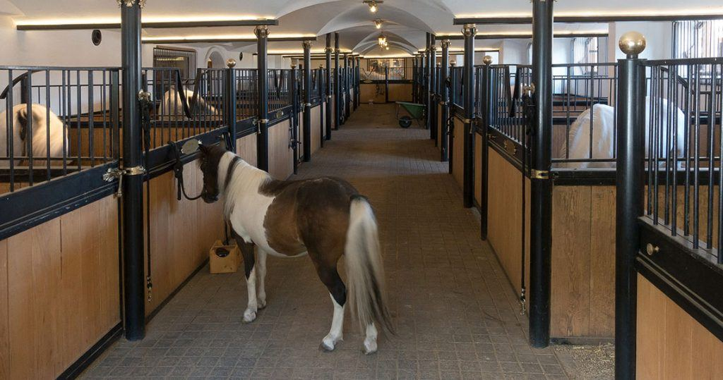 Equestrian CCTV