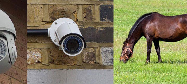 Horse Security Cameras